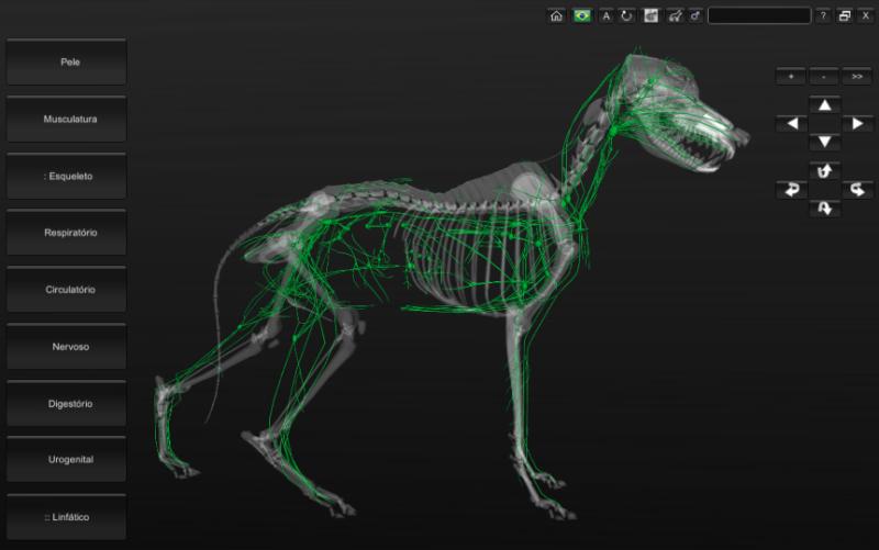 cachorro - vasos linfáticos