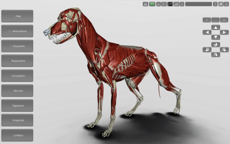 cachorro - musculatura