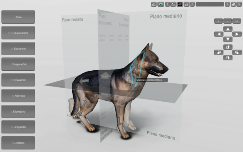 cachorro - planos anatômicos