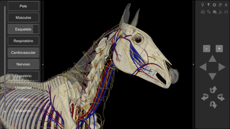 anatomia do cavalo - detalhe cabeça