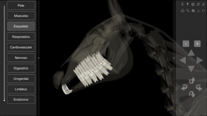 anatomia equina - dentes