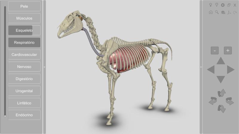 anatomia do cavalo - sistema respiratório