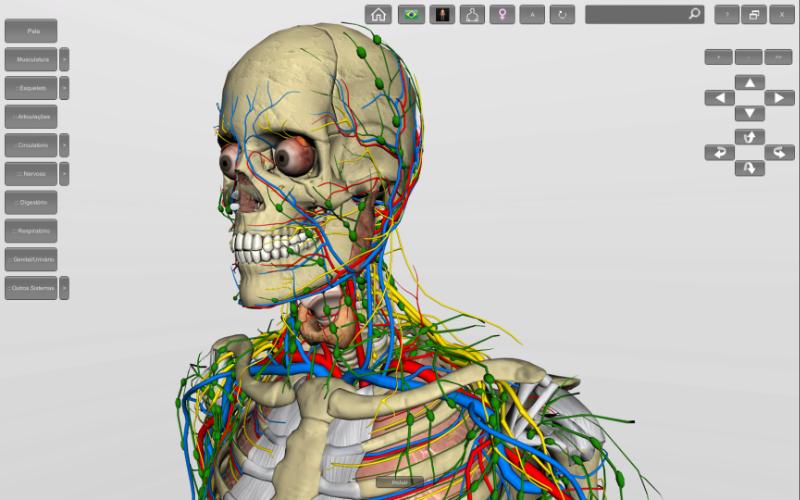 Anatomia humana - detalhes