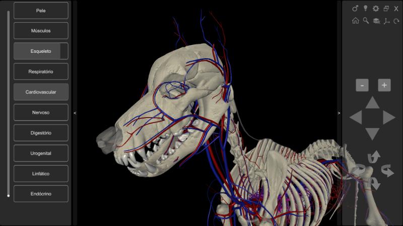 cachorro 3D - sistema cardiovascular