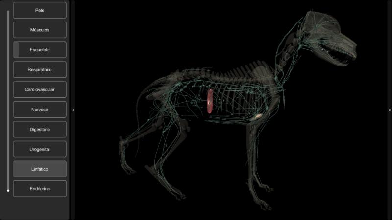 sistema linfático do cachorro