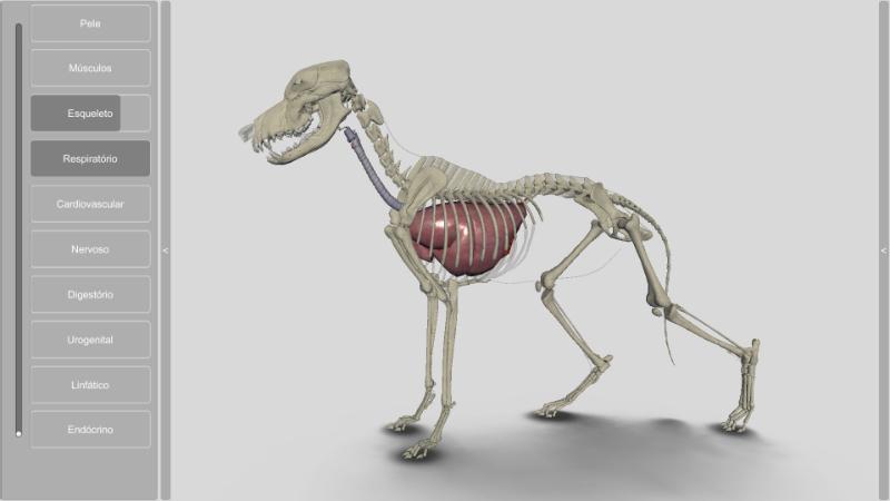 cachorro 3D - sistema respiratório