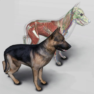 software anatomia canina 3D