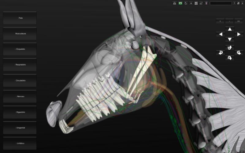 Anatomia da cabeça do equino