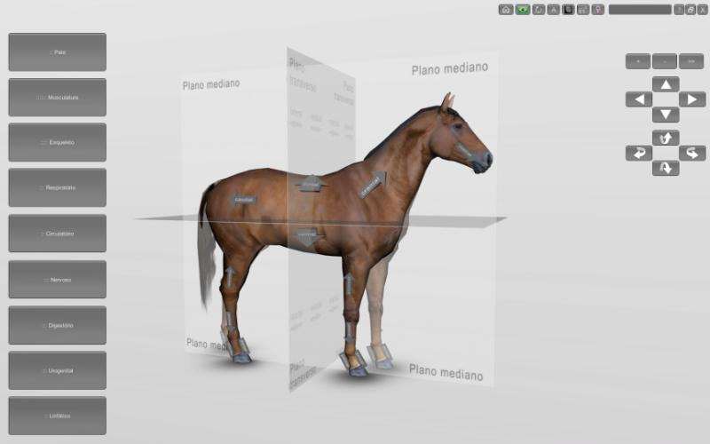 Planos anatômicos do cavalo