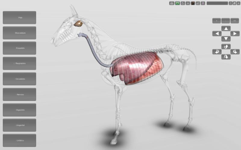 Sistema respiratório do equino