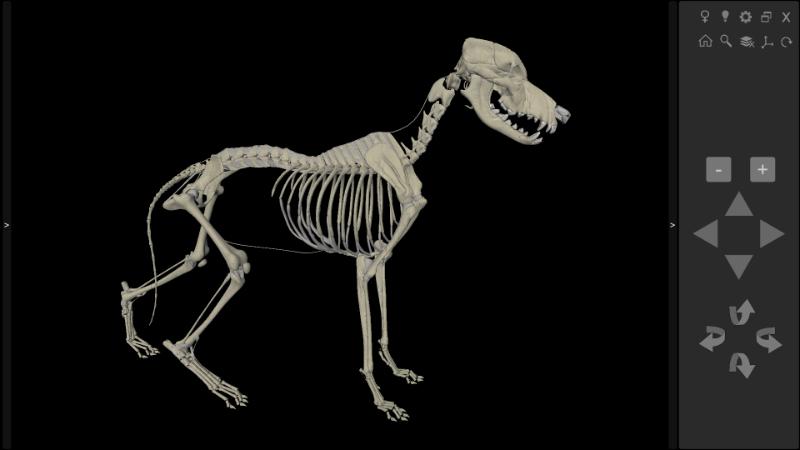 esqueleto de cachorro 3D
