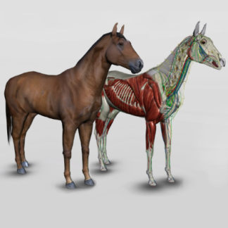 software anatomia equina 3D