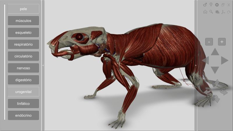 software anatomia do rato 3D