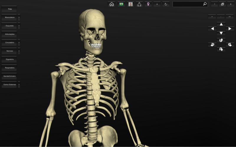 Esqueleto humano - anatomia