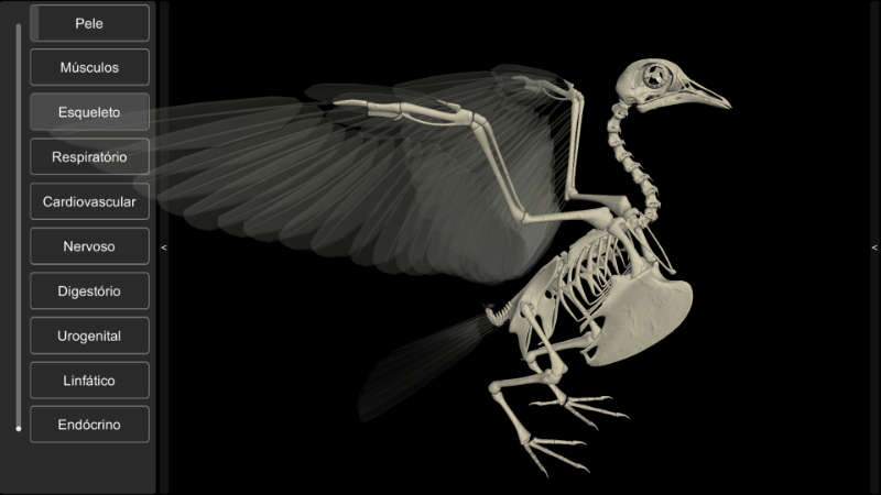 esqueleto de pomba