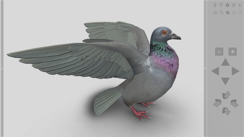 software anatomia das aves 3D