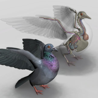 software anatomia das aves 3D