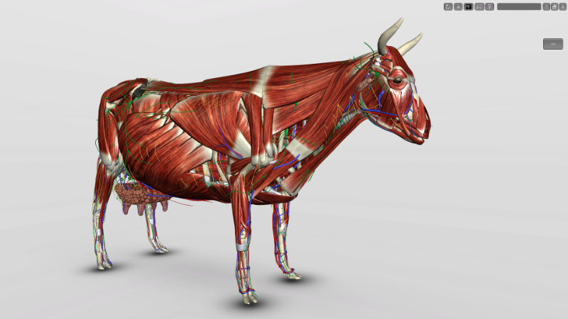 software anatomia bovina 3D