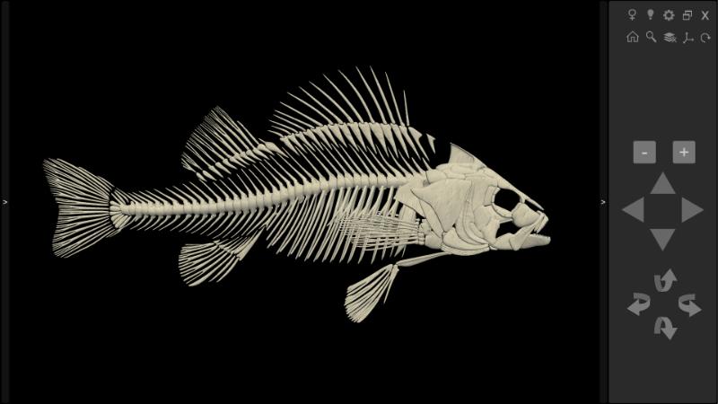 esqueleto de peixe 3D
