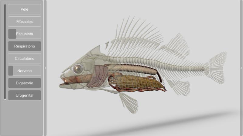 software anatomia dos peixes - sistema digestório