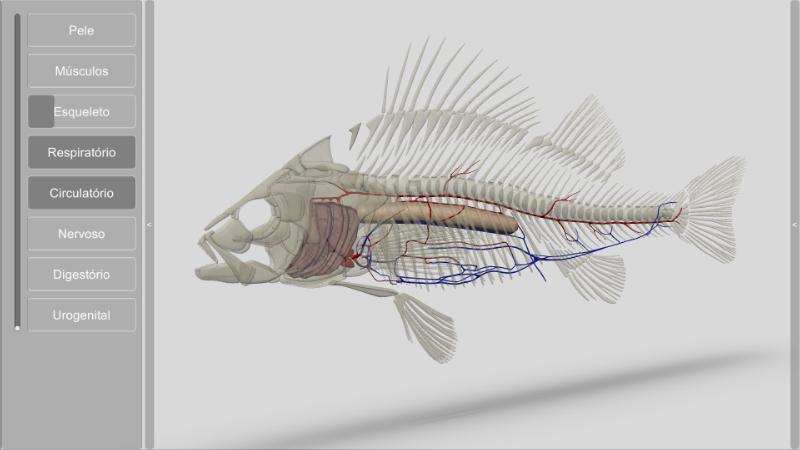 software anatomia dos peixes - circulatório e respiratório