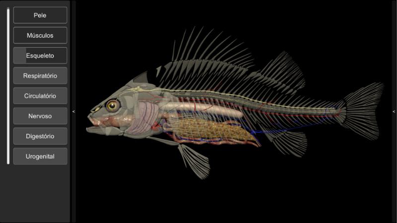 anatomia dos peixes - víceras