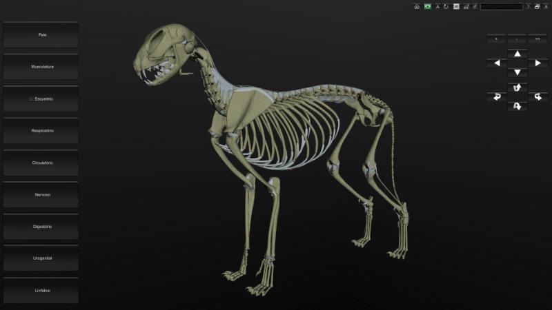 esqueleto de gato 3D