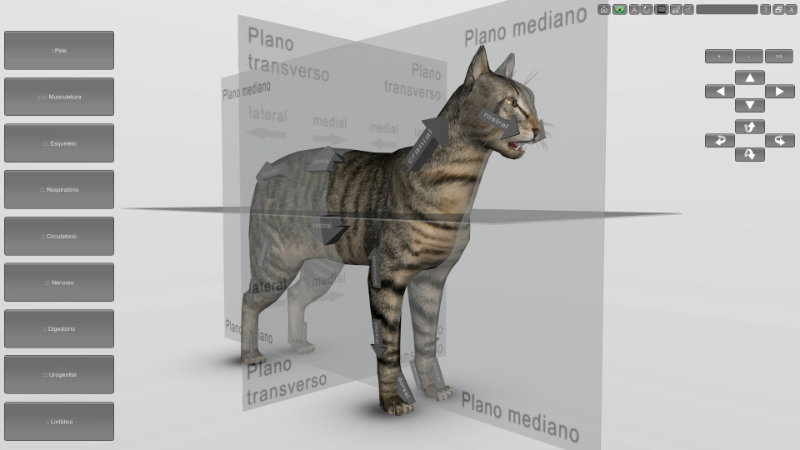 anatomia do gato 3D